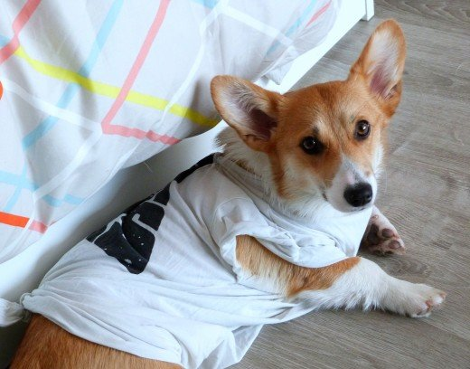 For some supervised dogs, a t-shirt may prevent them from scratching or licking and is less disruptive than a cone.