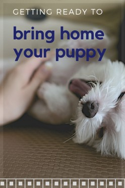 What to Expect Bringing a Puppy Home