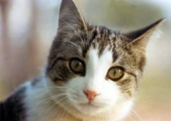 The Gospel Cat