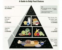 Difference Between the Food Chain, Web, and Pyramid