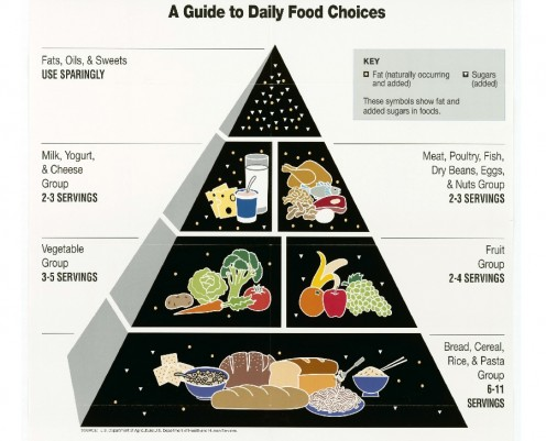 Difference Between a Food Chain, Food Web, and Energy Pyramid