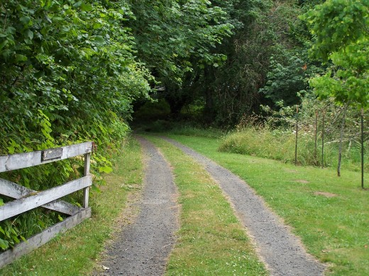 What path do you take?