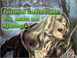 Poisonous Plants: Morning Glory (Ipomoea) Lupin, Aconite (Monks Hood Also Known as Wolfs Bane)