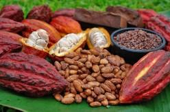 10 Amazing Benefits Of Dark Chocolate