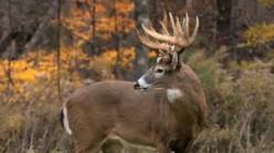 Evading Dragons, Part Nine: Deer Style