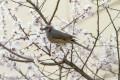 The Bird With a Broken Wing: A Short Story by Felisa Daskeo