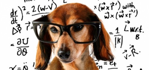 Your pet may not be a math whiz, but they do thrive on playing to get that intellectual stimulation.