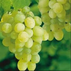 Details About Grapes