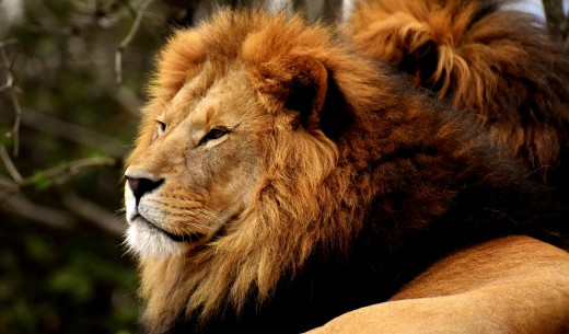 Being a King---but Still Only an Animal