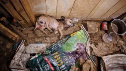 Puppy Mills: Multiplying Misery by Greed