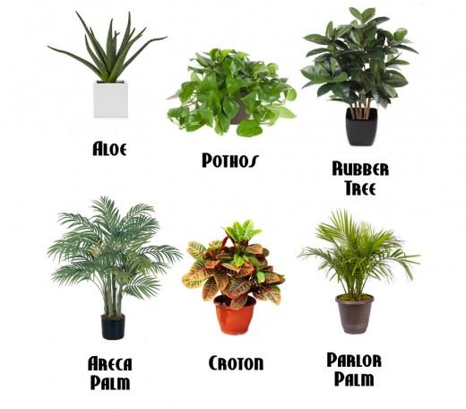 Easy upkeep houseplants