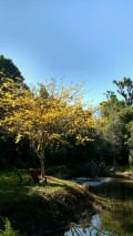We Are Experiencing a Season; Springtime in Florida, Very Rare and Welcome and the Sights, Sounds & Smells, Take Me Back