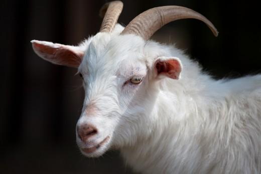 Does the goatman of acton lane exist?