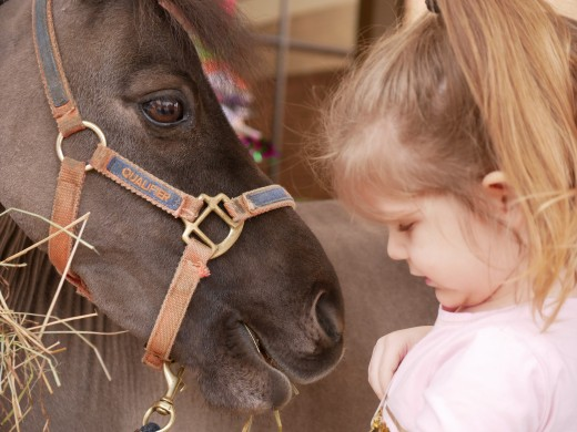 A little girl meets Fraggles, the Miniature Horse.