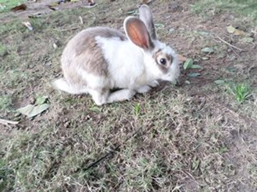 A pet such as a rabbit can help you to cope