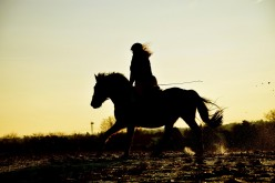 Overweight Riders Could Cause Serious Horse Health Issues