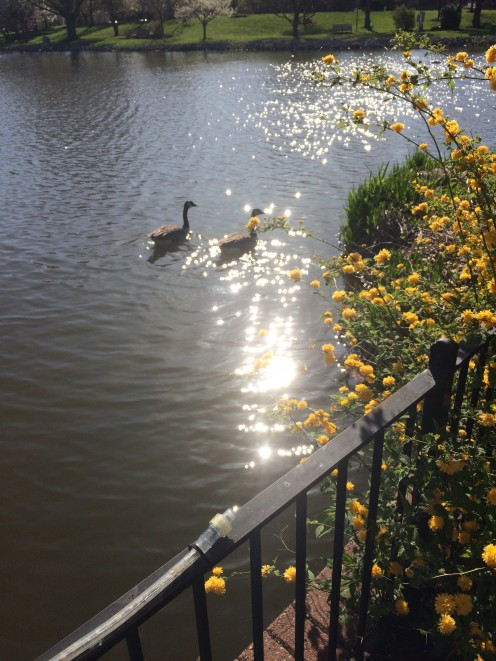 This is one of the images I captured for this challenge, though I did need to crop it down as you want to get full frame images if you can.  For this one, you can use the flowers cropped down, or the geese.  I just loved the morning light.