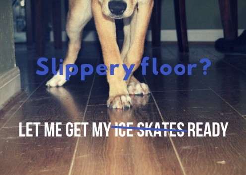 8 Ways To Keep An Old Dog From Slipping On The Floor Pethelpful