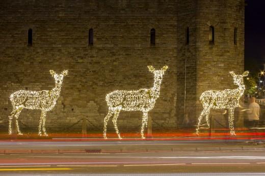 Reindeers by night