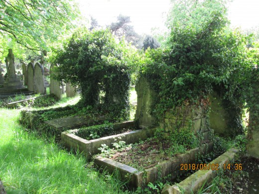 Is it neglect when Mother Nature chooses to colonise man's forgotten memorials?