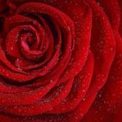 Valentine2018 profile image