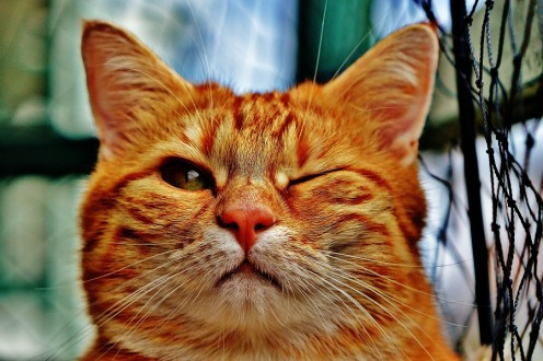 Poetry for Kids: Haiku Poems About Cats (and Kittens Too)