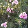 Deepa ashish ingh profile image