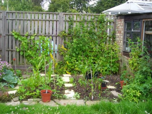 The Birth of a Garden Vegetable Plot
