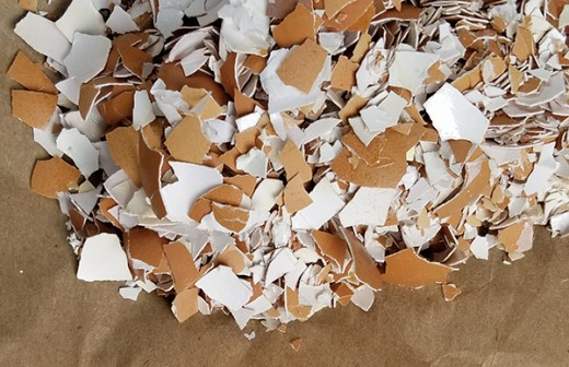 Lay eggshells on thick paper or newspaper