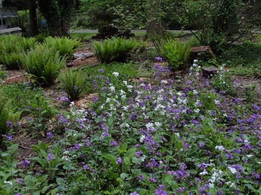 luminaria in the wildflower garden