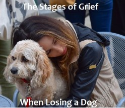 The Stages of Grief When Losing a Dog