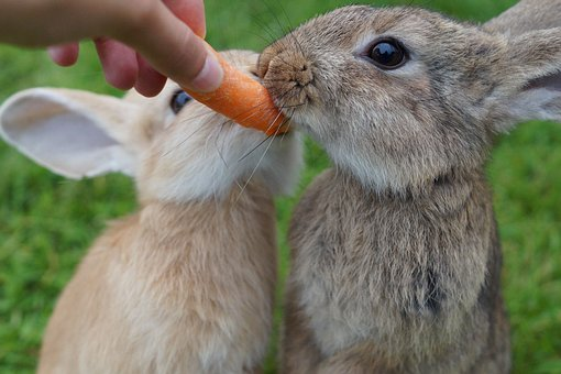 Everyone knows that rabbits like carrots