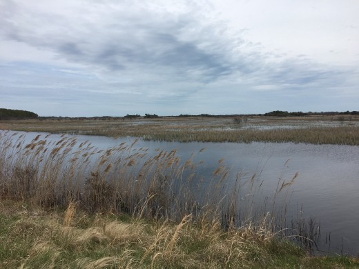 Back Bay Wildlife Refuge is a national park that offers a glimpse of how much of the eastern parts of Virginia looked before it was developed. There are stunning views on every trail.