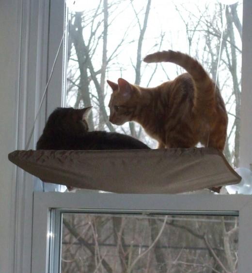 Buddies at a window.