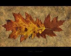 Sweet November -- A Haiku Poem