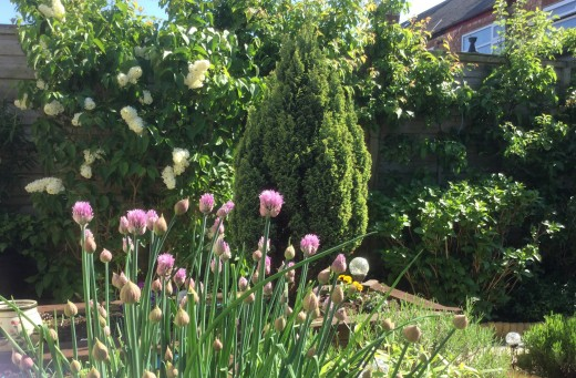 My garden looks inviting but not some days