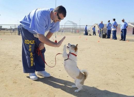 Many prisons have dog training programs
