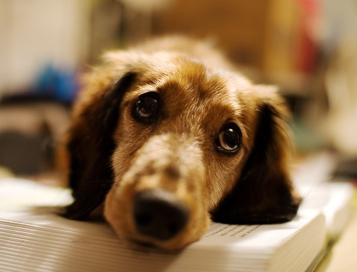 How do you know the exact time to say good-bye to your beloved furry family member and have him put down to sleep?