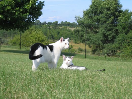 Purr-fect Fence sells cat fencing systems that keep your outdoor cat safe!
