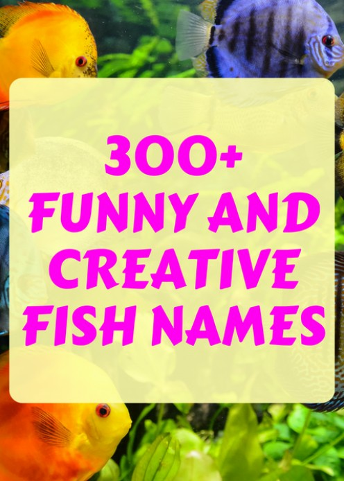 300+ Names for Every Pet Fish in Your Tank