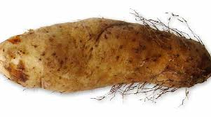 Yam contain mineral and vitamin to build muscles bones