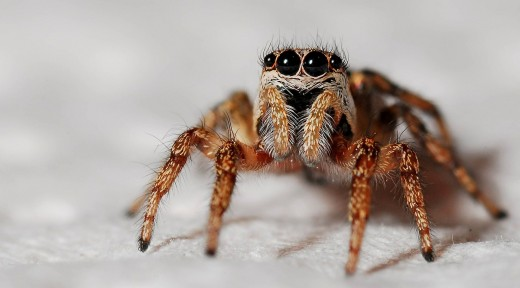 Spider Types and Identification Guide   Owlcation