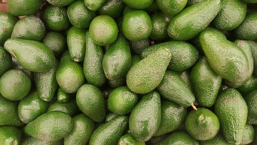 The benefit of avocado is making your bones healthy