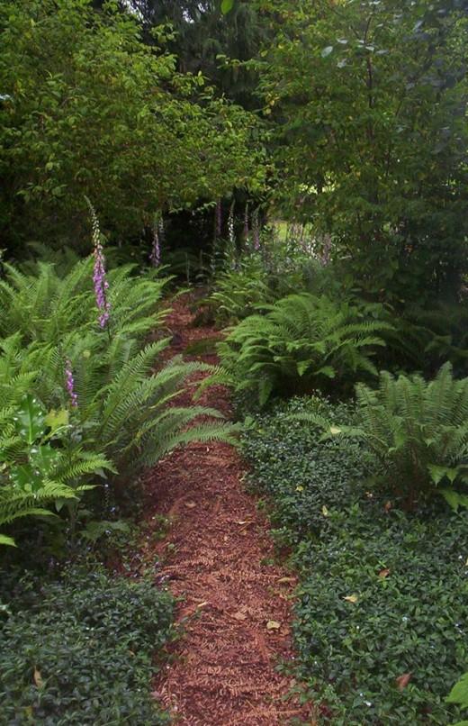 garden path through the wildflowers