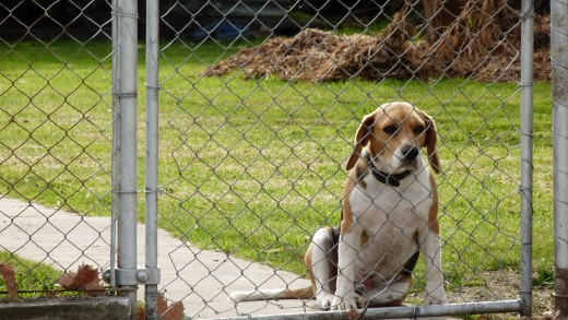 Sam noticed the dog, she felt the same way, we want to be somewhere else but are fenced in.