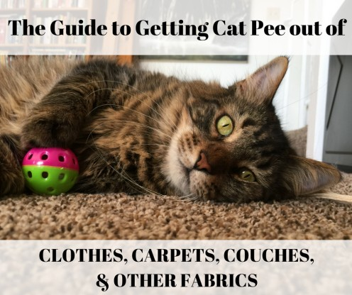 How to Get Cat Pee Out of Clothes, Towels, Rugs, and Carpet