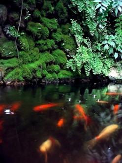 Red Algae Getting Rid Of Red Algae In The Aquarium