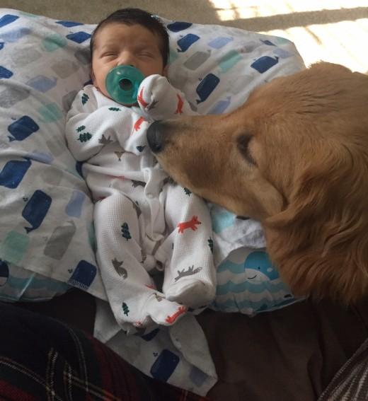 Bentley on baby duty watching his new buddy.