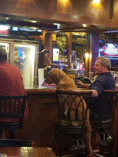 This was a dog that I actually saw at one of our local bars in Little Rock. I of course had to take a picture!