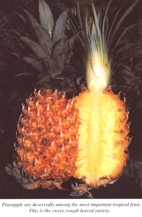 Nothing like pineapple for curing a sweet tooth.  Delicious.  Nutritious and smells fantastic